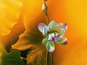 tranh hoa sen mã05